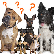 Frequently asked questions about professional dog walking in Abbotsford and Mission BC
